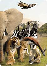 Раскраски - Животные