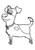 Раскраска - Тайная жизнь домашних животных - Щенок Макс