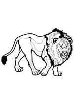 Раскраска - Дикие животные - Лев