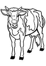 Раскраска - Домашнее животное - Корова