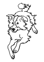 Раскраска - Домашние животные - Собака