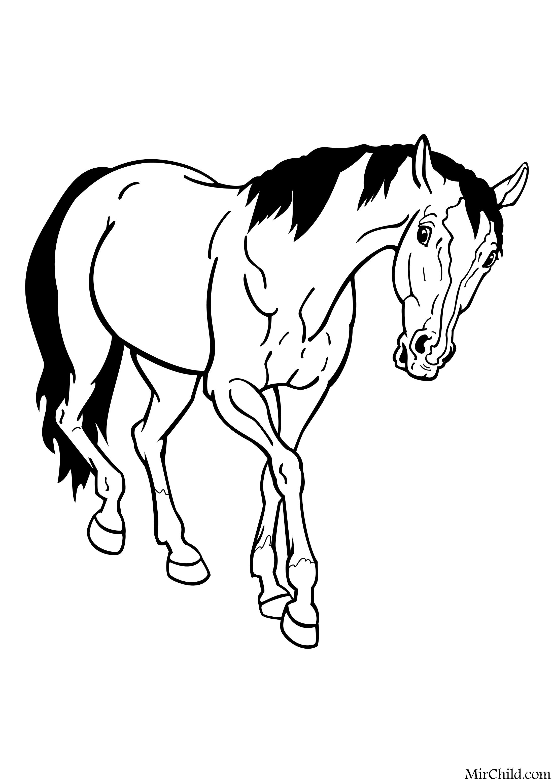 Раскраска - Домашние животные - Домашняя лошадь | MirChild
