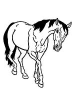 Раскраска - Домашние животные - Домашняя лошадь