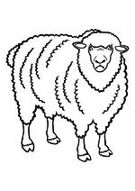 Раскраска - Домашние животные - Домашняя Овца