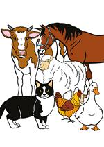 Раскраски - Домашние животные
