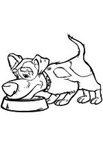 Раскраска - Маша и Медведь - Щенок ест из миски