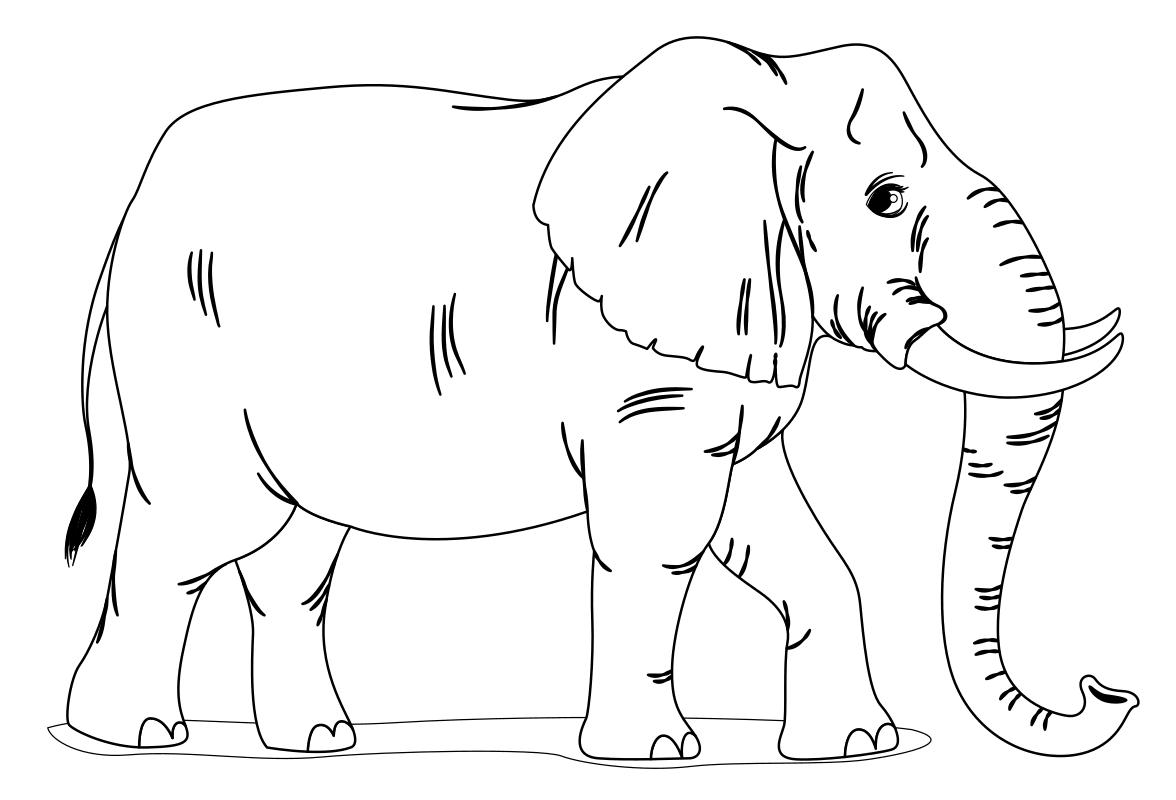 Картинка раскраска слона