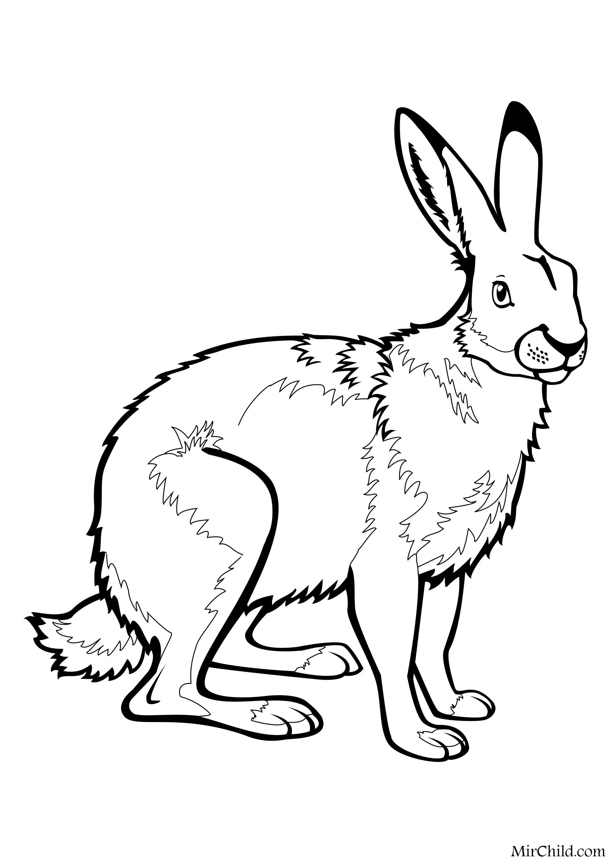раскраска дикие животные заяц русак Mirchild