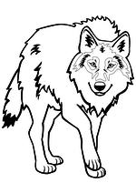 Раскраска - Дикое животное - Волк