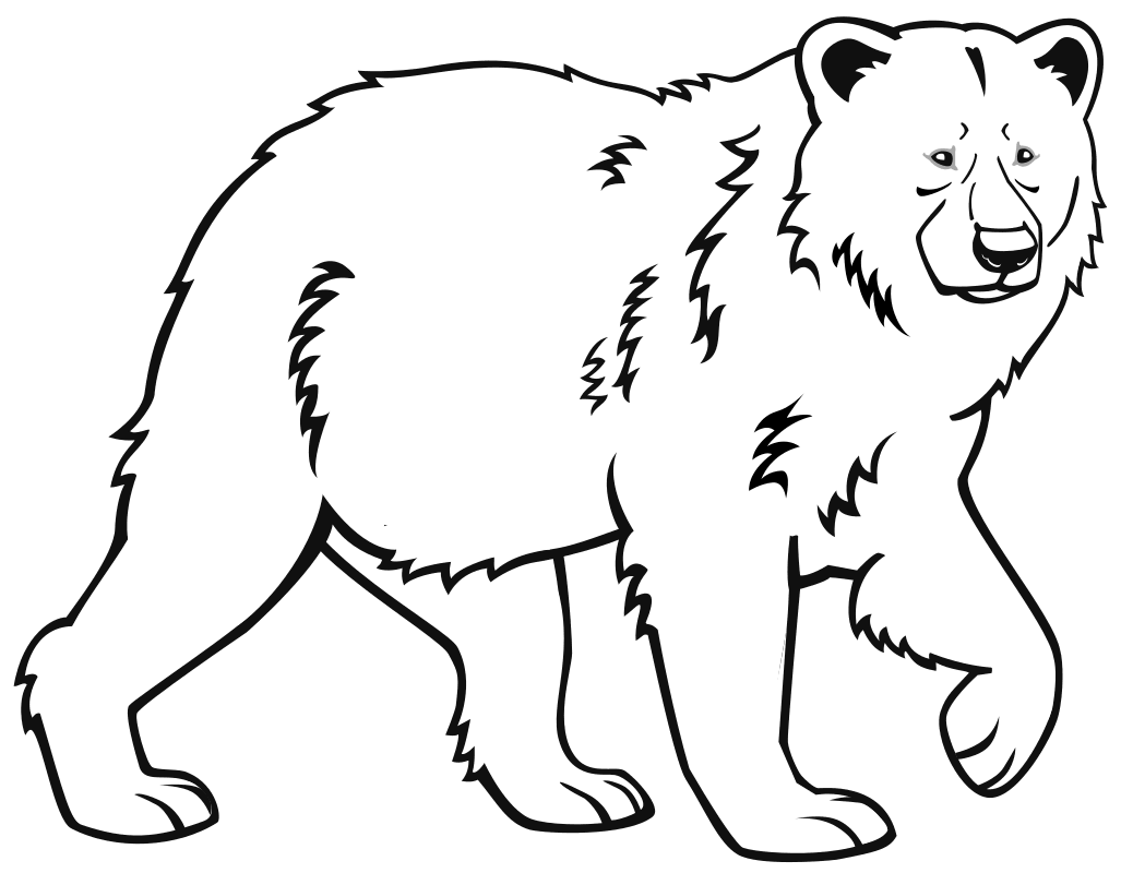 бурый медведь картинка для раскрашивания