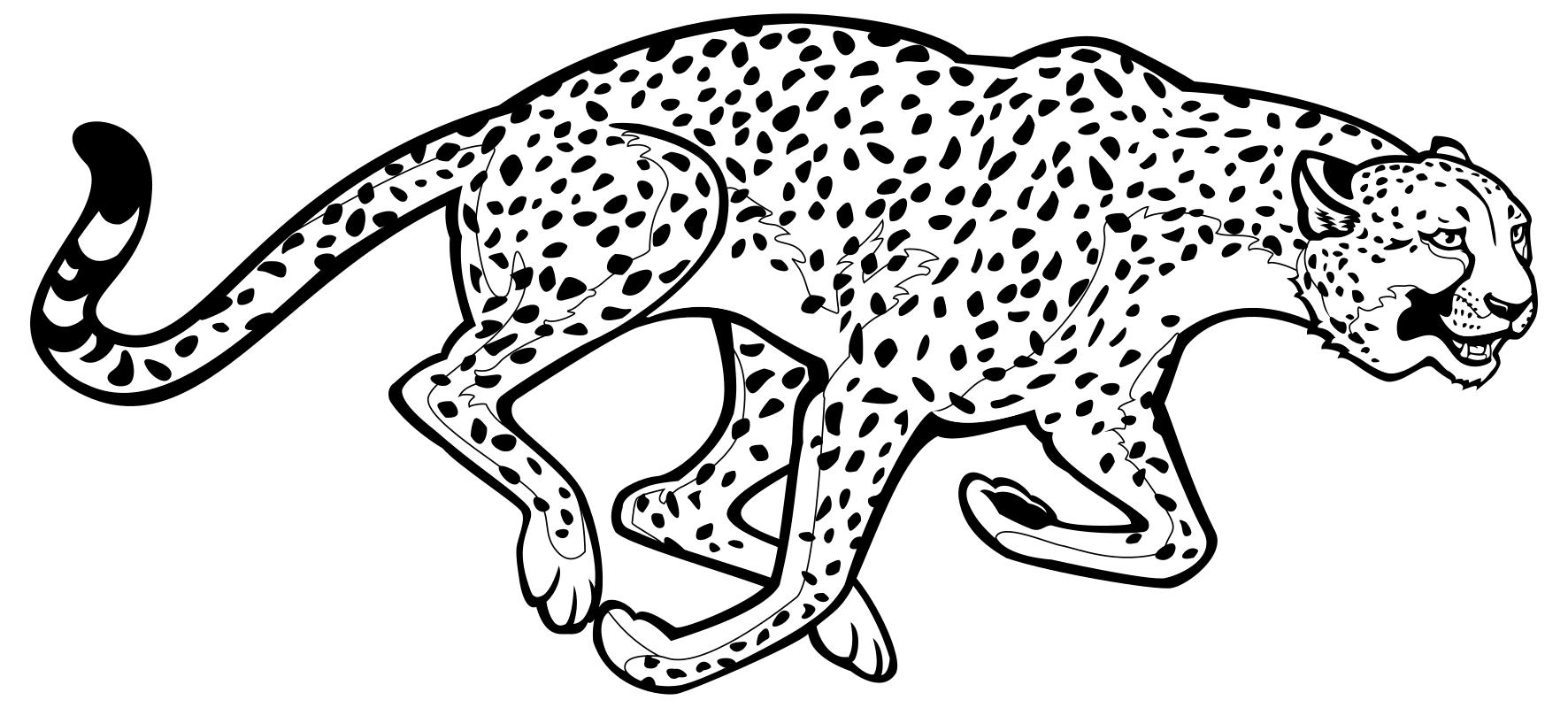 Раскраска - Дикие животные - Гепард