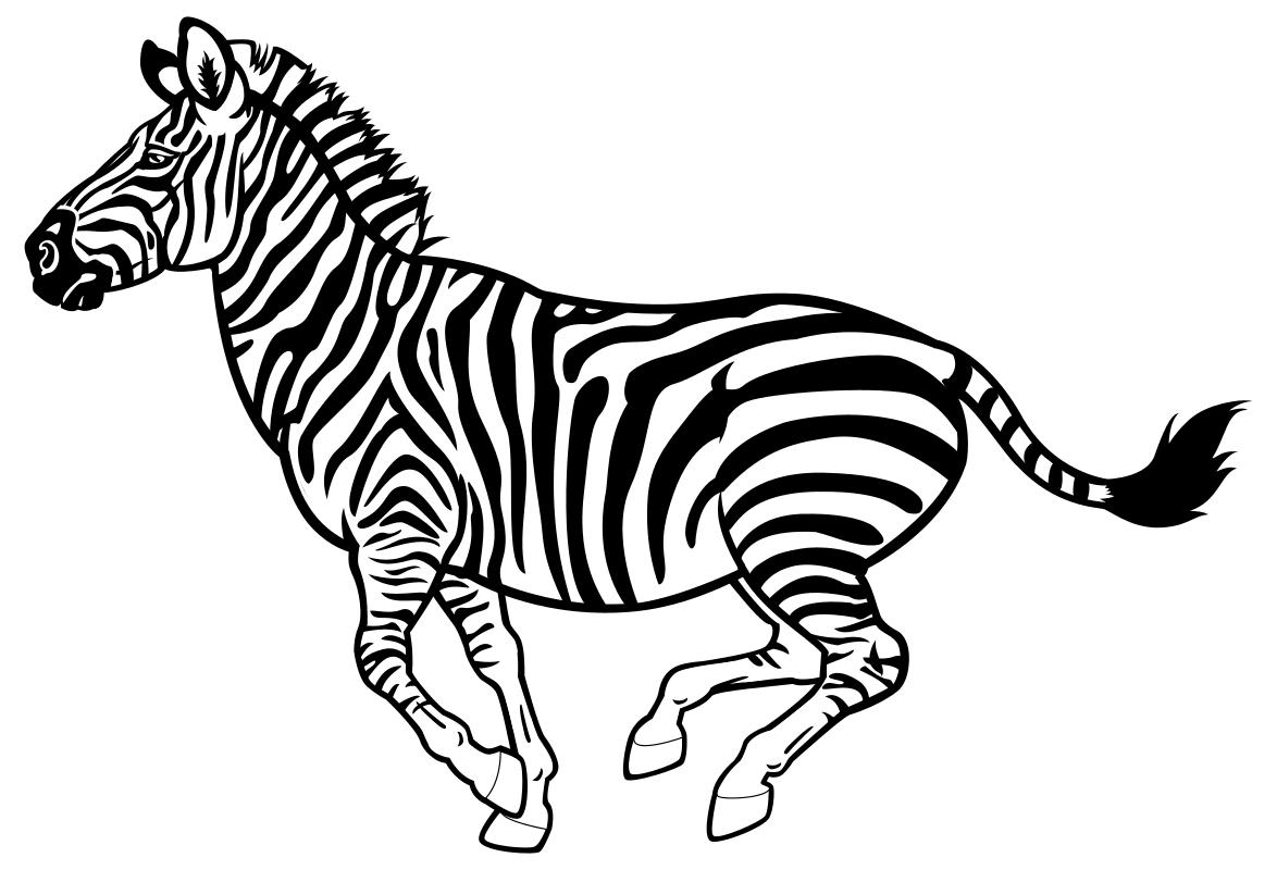 раскраска зебры на белом фоне