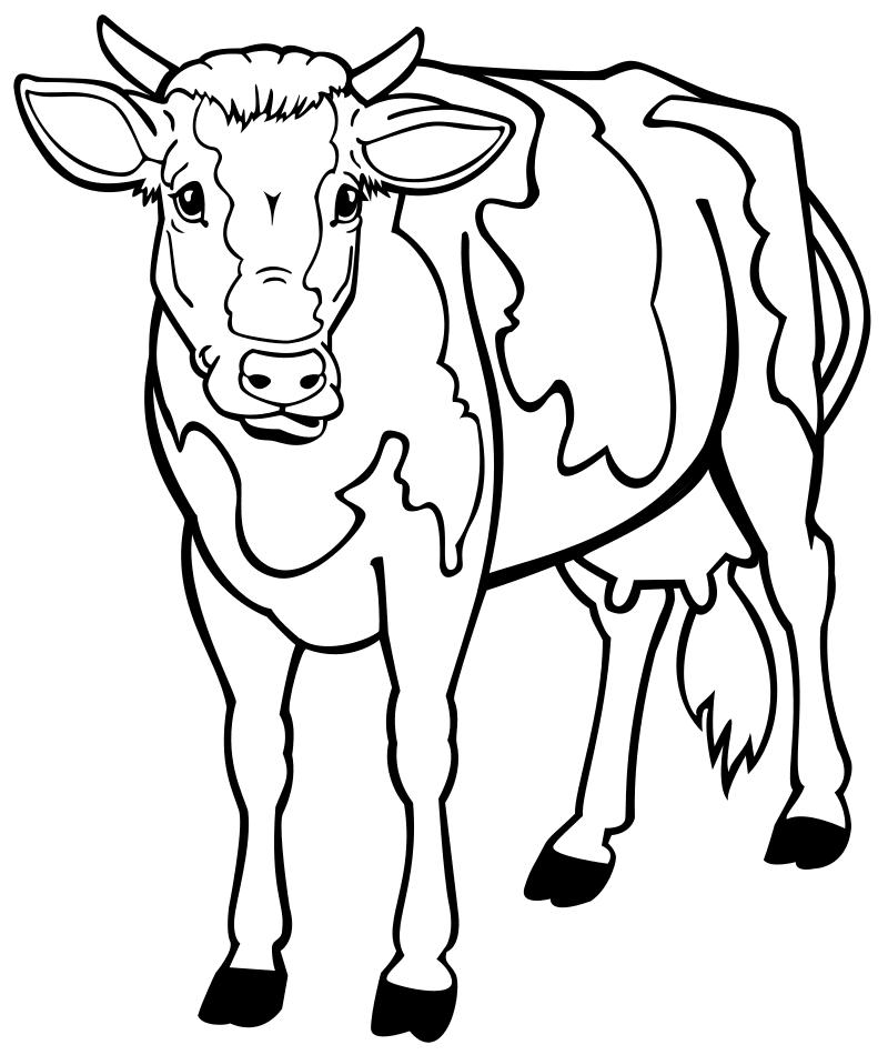 Раскраска - Домашние животные - Корова | MirChild