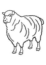 Раскраска - Домашние животные - Овца