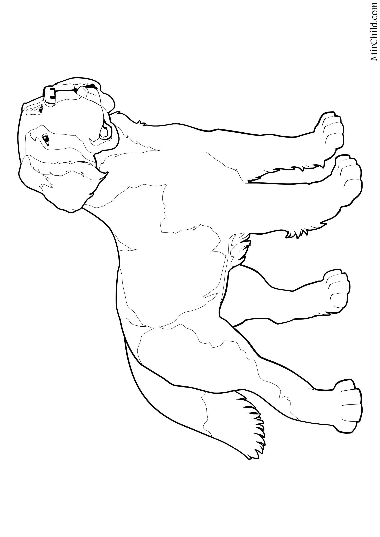 Раскраска - Собаки - Сенбернар | MirChild