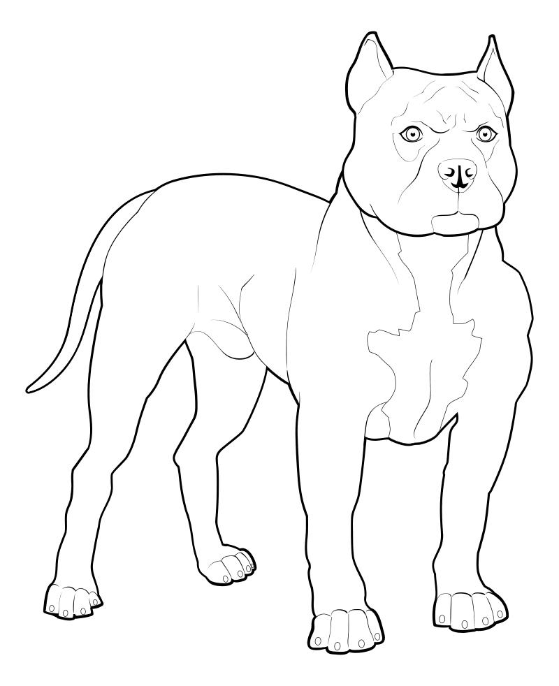 Раскраска - Собаки - Питбуль